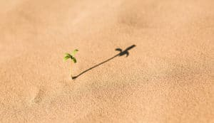 Seedling growing out of the sand.